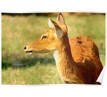 Deer 1 Poster