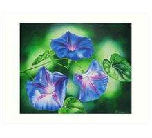 Three Morning Glories Art Print