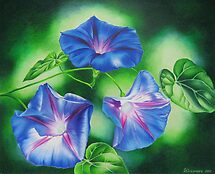 Three Morning Glories by lanadi