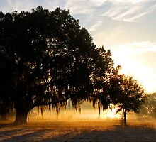 Good morning Mr. Oak tree by Rebecca Morrison