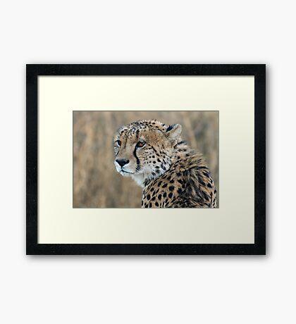 Regal Beauty Framed Print