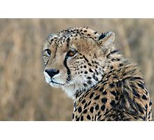 Regal Beauty Photographic Print