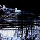 Ducks on a pond by Mjay