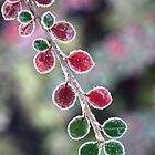 Red & green by SylBe