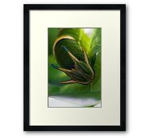 Polyura Sempronius Framed Print