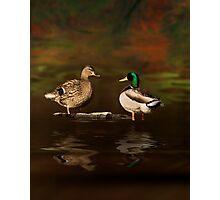Duck Soup Photographic Print
