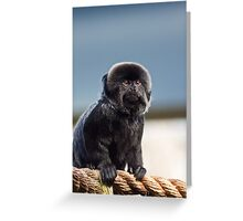 They Say Im a Little Monkey (Goeldis Monkey) Greeting Card