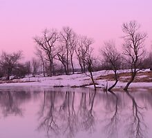 Rosy Gray Reflections by lorilee