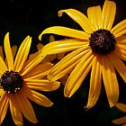 Dew Kissed Rudbeckia by Victoria Jostes