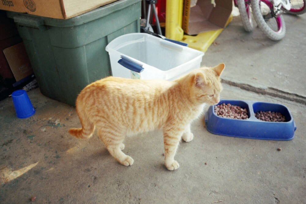 Buttercup the guard cat! by James Gibbs