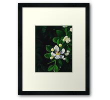 White Flowers I Framed Print