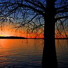 Bayou Sunset by Chris Ferrell