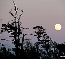 MOON in LOUISIANA by Debbie Robbins