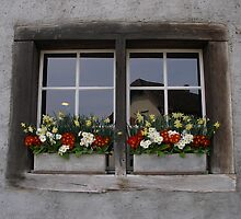 Window boxes by RightSideDown