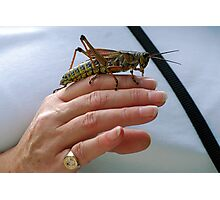 Lubber grasshopper and friend Photographic Print