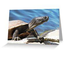 Turtle in Echo park LA Greeting Card