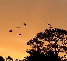 White Ibis Sunrise by Joe Jennelle