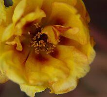 Bloom by Jesse Kanae