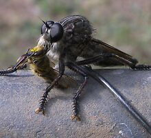 Robber Fly by gnarlyart