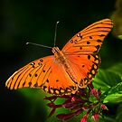 Butterfly in Orange by Joe Jennelle