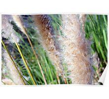 Windswept Reeds Poster