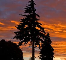Trees at Sunset by Vickie Burt