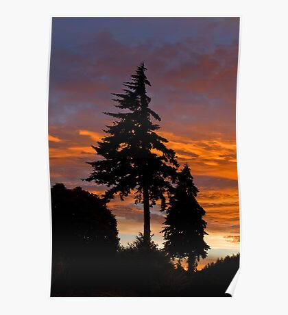 Trees at Sunset Poster