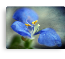 Blue Whisper Canvas Print