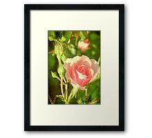 Beauty © Framed Print