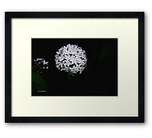 Snow ball @ night  Framed Print