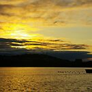 Pure Gold Over Lake Burley Griffin  by David McMahon