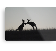 Kangaroos, Boxing for the Lady - Whittlesea, Victoria Metal Print