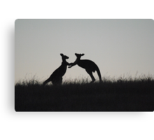 Kangaroos, Boxing for the Lady - Whittlesea, Victoria Canvas Print