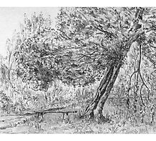 """A quiet corner"", Sutton Park (pencil sketch 1958) by wippapics"
