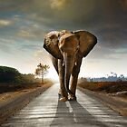 Elephant Walk by ccaetano
