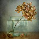 Hydrangea by Mandy Disher