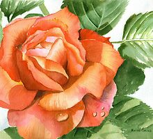 Orange Rose, Kissed by Dewdrops by Anne Sainz