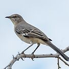 Mockingbird by George Lenz