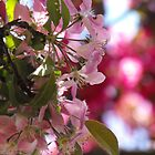 Apple Blossom Bokeh by Tracy Faught