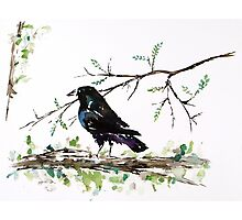 Crow on a Branch Photographic Print