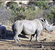 Mother and baby rhino by almaalice