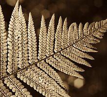 Fern spores by StefanFierros