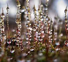 Mossy Diamonds by Ann Garrett