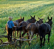 Amish Farm Scene by Jane Jenkins