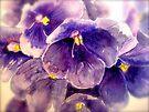 Violets... by © Janis Zroback