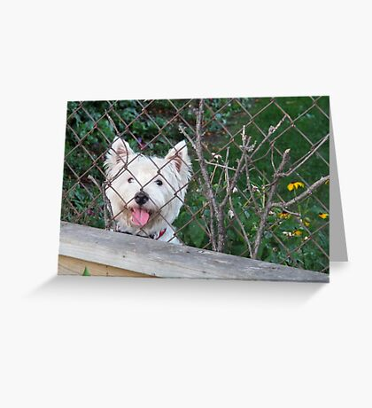 Nosy Parker Greeting Card