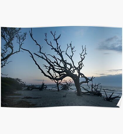 Driftwood Tree Upright & Proud Poster