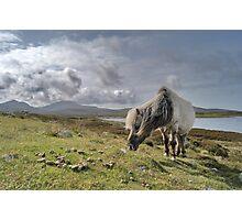 Hebrides, Wild Pony Photographic Print