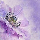 Anemone by Priska Wettstein
