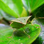 Shield Bug by Elias Martinez